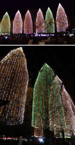【季節の一枚】日本一高い木のイルミネーション