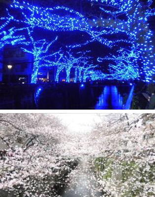 【季節の一枚】目黒川の冬と春