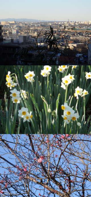 【季節の一枚】早春の百草園