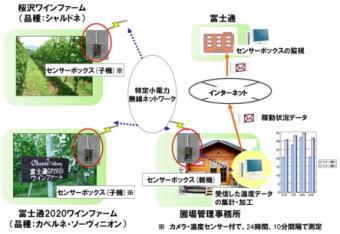 富士通は山梨県のワインファームでセンサーを活用した農業支援を開始