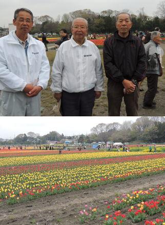 40万本のチューリップがお出迎え、羽村市観光協会・中野康治会長も大忙し